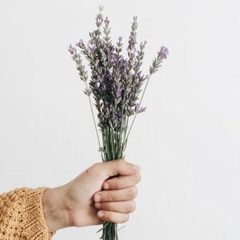 Fresh lavender bunch