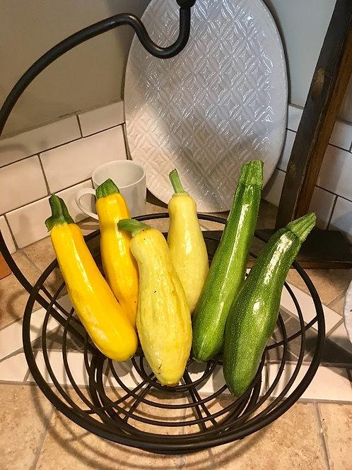 Zucchini / Yellow Squash Seedlings