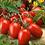 Thumbnail: Tomato Seedlings (Roma/Paste)