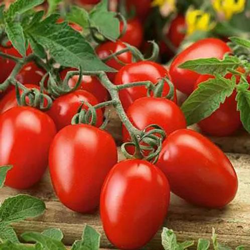 Tomato Seedlings (Roma/Paste)