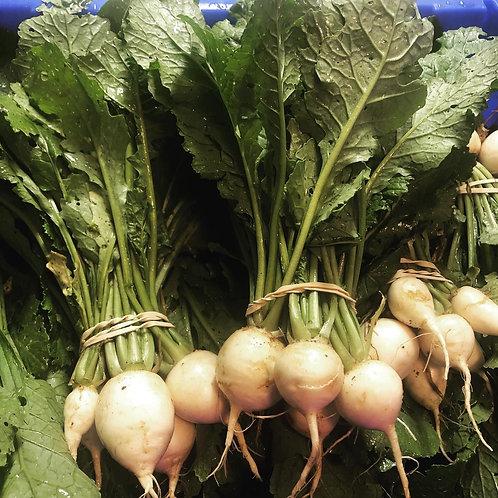 Turnips, Hakurei/Salad (bunched)