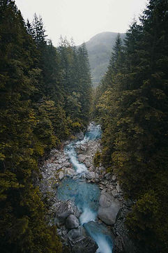 Idaho-Washington-river-trees.jpg