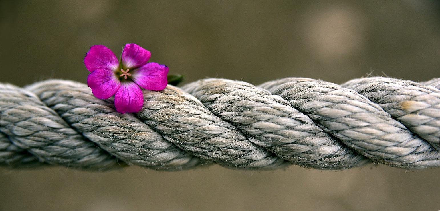 rope-3747287_1920.jpg