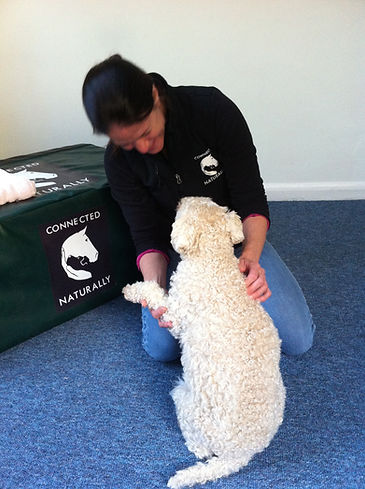 Chiropractic for Dogs