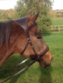 PIM Bitless Horse Bridle