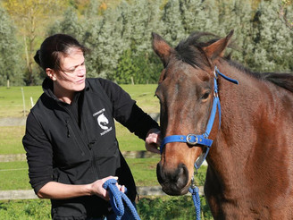 Is Your Horse In Pain?
