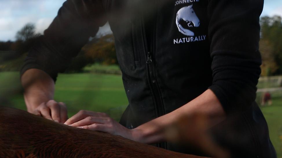 Chiropractic for Horses, Equine Chiropractic