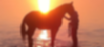 Chiropractic for Horse and Rider