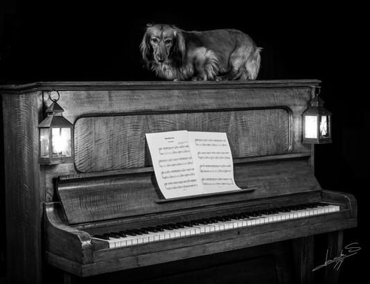 Op piano 2019-03-04 zwart-wit.jpg