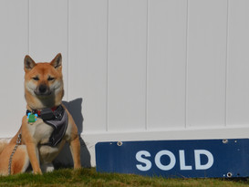 Roscoe with Sold Sign