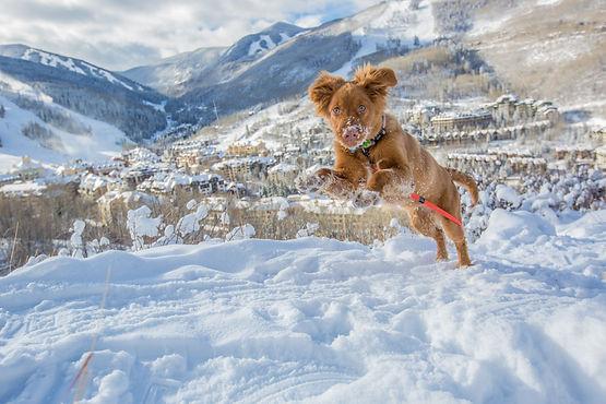 BC_VILLAGE_SNOW_FINLEY-1288.jpg