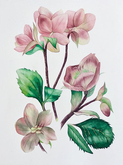 Aquarelas Flores