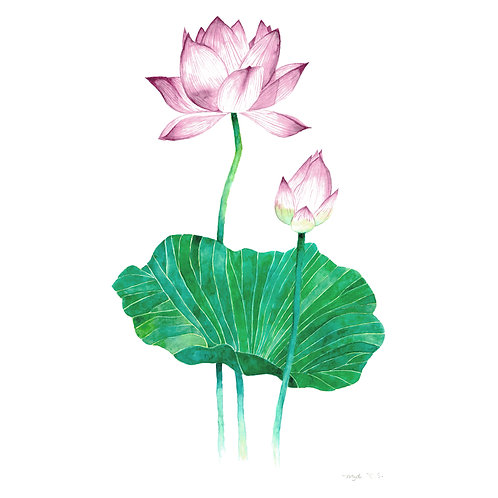 Aquarela Flor e Broto