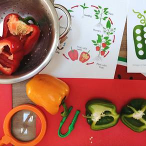 Un légume fruit: le poivron