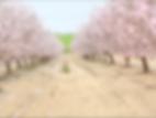צילום מסך 2020-01-14 ב-11.56.10.png