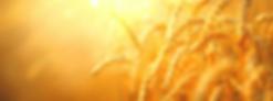 צילום מסך 2020-05-10 ב-23.17.44.png