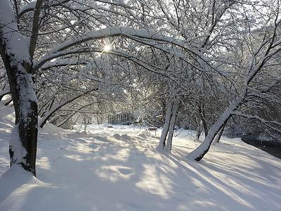 Зимний лес в солнечный день, заснеженные деревья и кустарники
