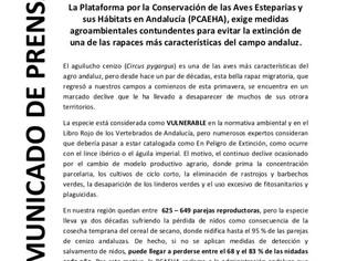 Desde la Plataforma para la Conservación de Aves Esteparias y sus Hábitats en Andalucía solicitamos