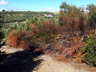 SIECE pide a la Junta de Andalucía que denuncie la eliminación de vegetación natural en áreas agríco