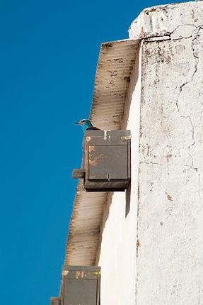 Carraca Coracias garrulus caja nido