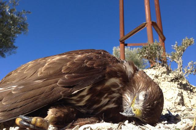 Detección de tendidos eléctricos peligrosos para aves