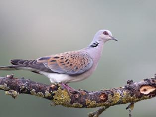 Junto a SEO/BirdLife, solicitamos a las autoridades ambientales incrementar la vigilancia para prote