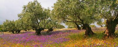 Proyecto Biodiversidad y Olivar.jpg