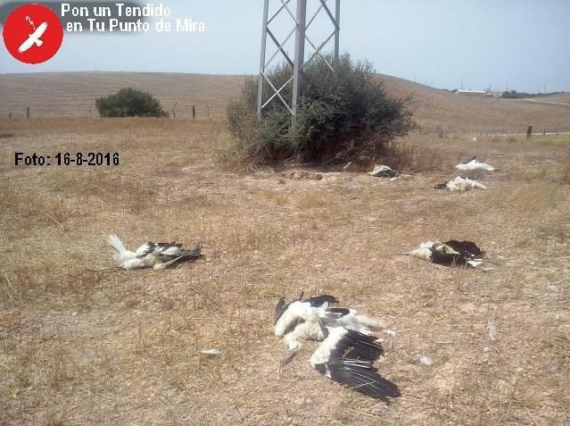 electrocución aves cigüeñas Andalucía