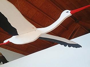 Ayuda a la Cigüeña blanca, el Aguilucho cenizo o el Cernícalo primilla