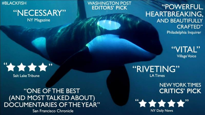 Blackfish and what you thought you knew about killer whales