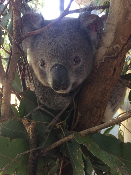 Koality time volunteering in Australia