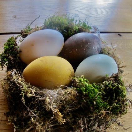 Spring Eggs, Anne Bergeron