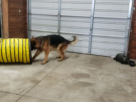 Richochet and Remi At Play!
