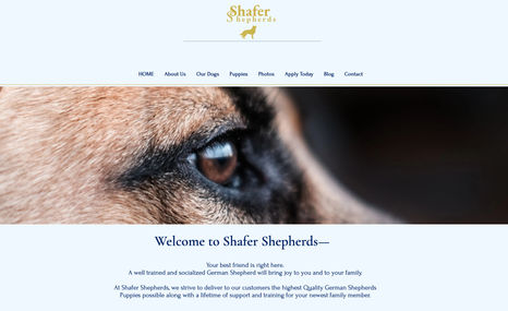 Shafer Shepherds Breeder of German Shepherds, Kansas, USA