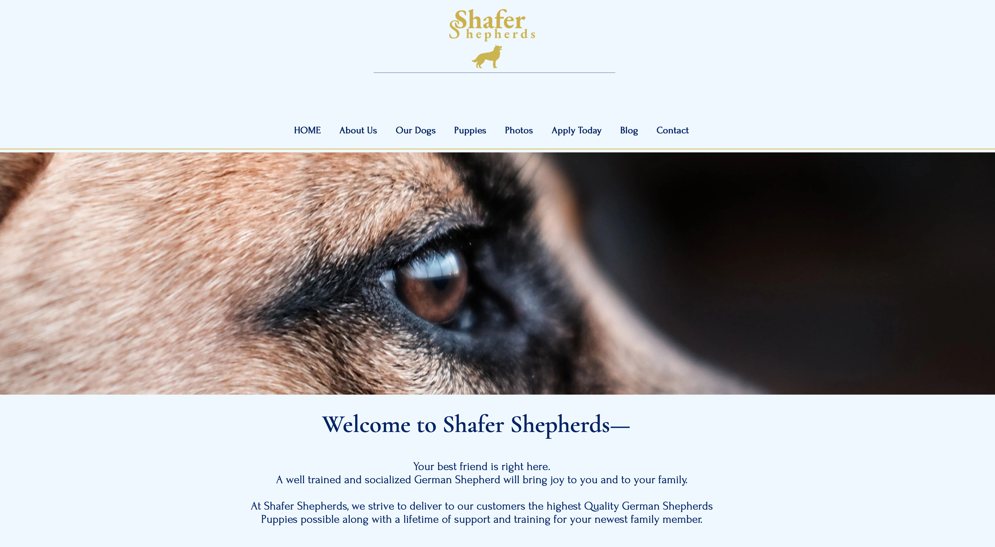 Shafer Shepherds