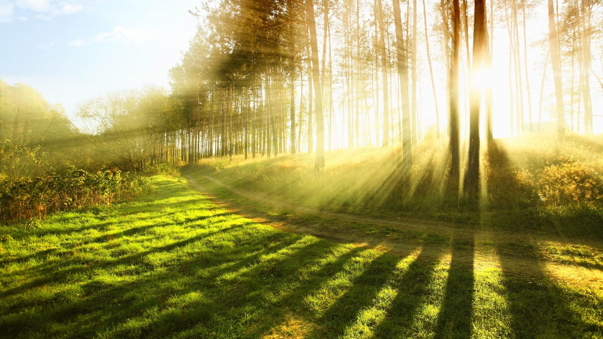 sunlight-2.jpg