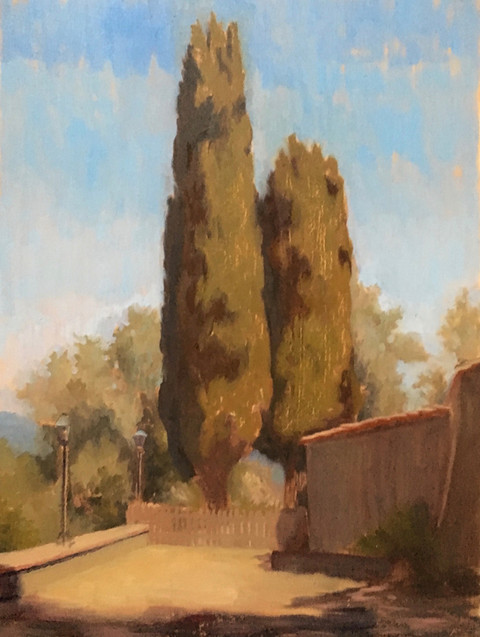 Cypress in Umbria