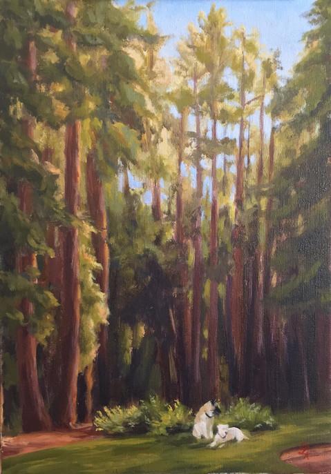 Woodside Redwoods