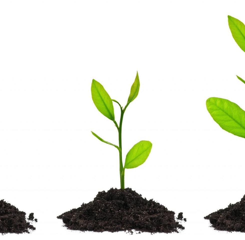 bonsai-tree-seeds.jpg