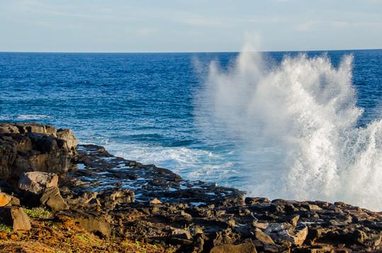 hawaii (21 of 41).jpg