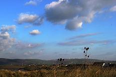 Ynyslas Dunes National Nature Reserve, Dyfi Biosphere, Wales
