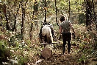 Horse logging, Dyfi Biosphere, Wales