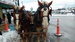 Bridge Drop Horses