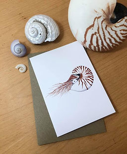 Nautilus front.jpg