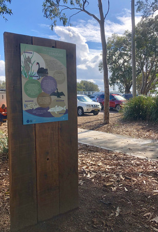 Seagrass and wildlife information sign
