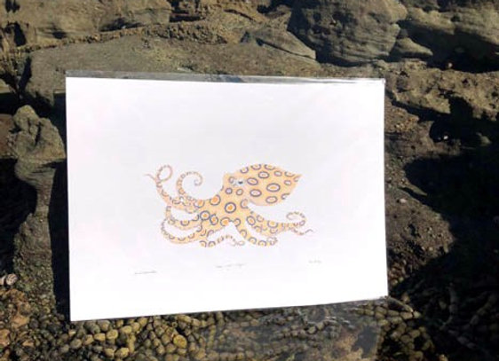 'Blue-ringed octopus' A3 unframed print