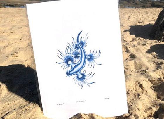 'Glaucus atlanticus' A3 unframed print