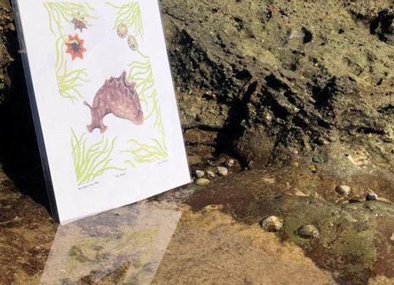 'Sea hare' A4 unframed print