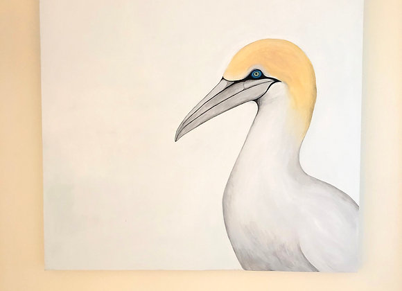 Australasian Gannet Original Painting