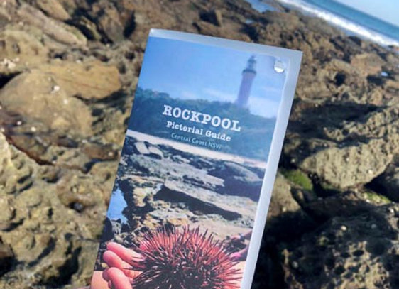 Rockpool Pictorial Guide